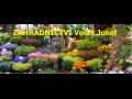 Zahradnictví Příbram - sazenice, řezané květiny i ovocné stromy, okrasné květiny