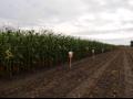 Osiva i poln� plodiny pro p�stitele - kvalitn� osiva od spolehliv�ho dodavatele