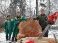 Rizikové kácení stromů a ošetřování stromů na zahradách i ve městech
