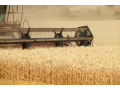 Ad hoc průzkum trhu v zemědělství - osiva i veterinární léky