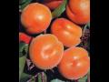 Prodej ovocných stromků Velim