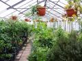 Zahradnictví KRUH pěstování prodej subtropických rostlin léčivých