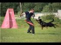 Rekvalifikační kurzy v oboru psovod i ostraha objektů