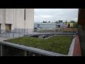 Plochá zatravněná zelená střecha, výhodná realizace s dotekem přírody