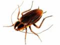 Hubení škůdců, Chomutov