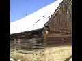 Odborné mykologické posudky dřevěných konstrukcí | Náchod