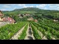 Návštěva vinařství - vinařův balíček Mikulov, Bavory