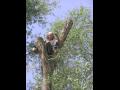 Ošetřování stromů Praha