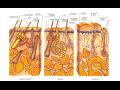 Dermatovenerologie Praha – pomoc s kožními nemocemi u žen i mužů