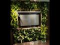 Zelená stěna Ostrava - pěstování rostlin na vertikální stěně
