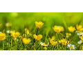 Ochrana životního prostředí a ekologické poradenství