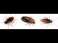 Dezinsekce - huben� �v�b�, cvr�k�, rus�, �t�nic, rozto��, mravenc�