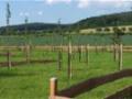 Zahradní úpravy, údržba a návrhy zeleně Prostějov