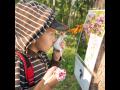 Projekt o včelařství