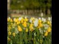 Mezin�rodn� zahradnick� v�stava a veletrh Flora, jarn� etapa