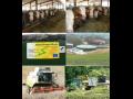 Prvotřídní krmné obiloviny Silyba | Ústí nad Orlicí
