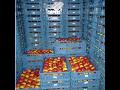 Skladovací prostory pro uskladnění jablek