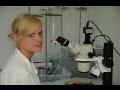 Staatliches Veterinärinstitut führt eine professionelle Diagnostik aus, Prag die Tschechische Republik