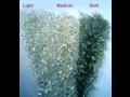 regranuláty LDPE