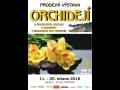 Výstava orchidejí České Budějovice – zavítejte do exotiky v zimě
