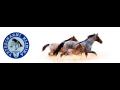 Pohotovost pro zvířata Plzeň – řešení akutních případů
