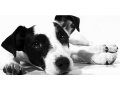 Fyzioterapie a rehabilitace (RHB) pro psy Plze� - alternativn� zp�sob l��by