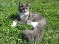 sterilizace koček v Ostravě