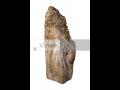 Prodej zkamenělého dřeva, stromy, zkamenělin, fosilního dřeva, kameny s fosíliemi