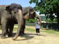 Krmen� slon�, �iraf a tule�� v zoo �st� nad Labem - z�itkov� programy i pro d�ti