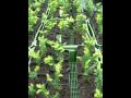 Pěstování a prodej lesních sazenic, stromů, keřů i dřevin