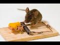 Deratizace dezinsekce hubení myší potkanů odstranění vosích hnízd