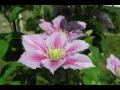 Dendrologick� zahrada Pr�honice