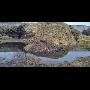 Svoz a likvidace bioodpadu v regionu Zlínský kraj-biologický odpad