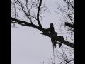 Praha k�cen� strom�, v�kov� pr�ce, odkl�zen� sn�hu