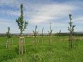Projekty v r�mci v�sadby krajinn� zelen�, sad�, alej�, tr�vn�k�