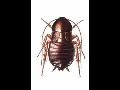 Hubení štěnic, mravenců a švábů Praha