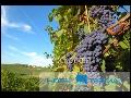 Ochutnávka vín, vinotéka, vellness pobyty