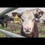 Vynikající čerstvé kravské mléko z mlékomatu - prodej každý den