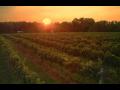 Vinařství Lednice, vinné sklepy Valtice