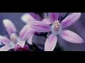 Květová terapie, květové esence na míru, pro děti-řešení na životní i zdravotní problémy