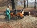 Ošetřování a kácení stromů pro obce, města a firmy