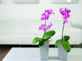 Samozavlažovací květináče Zlín