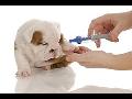 Veterinární ambulance s širokým výběrem služeb pro malá a hospodářská zvířata
