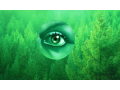 Poradenství v lesním hospodářství - analýzy hospodaření, software pro lesní hospodáře
