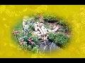 Kompletní zahradnické práce - realizace zahrad na míru