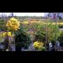 Sadové úpravy a návrhy zahrad - zahradnické práce, zahradnictví Opava