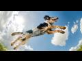 Veterinární vyšetření dýchacích cest u zvířat, bronchoskopie