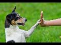 Kvalifikovaná veterinární péče Ostrava