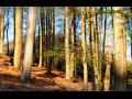 Prodej lesů bez pozemku