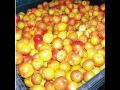 Ovoce a zelenina, velkoobchod, distribuce, zásobování prodejen, restaurací, hotelů